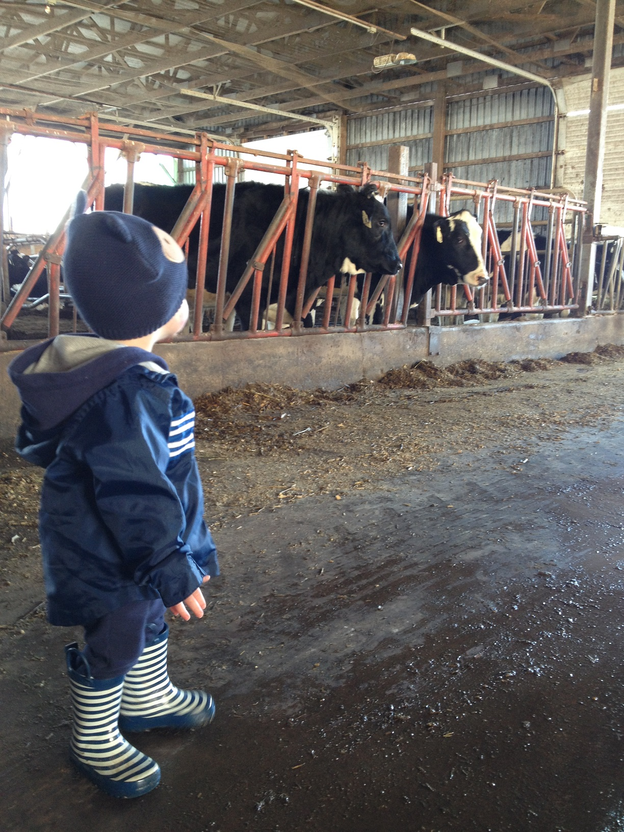 visit to a dairy How to visit a dairy farm dairy farms are full of activity from pre-dawn until after  the sun goes down farmers milk and feed cows, clean barns,.