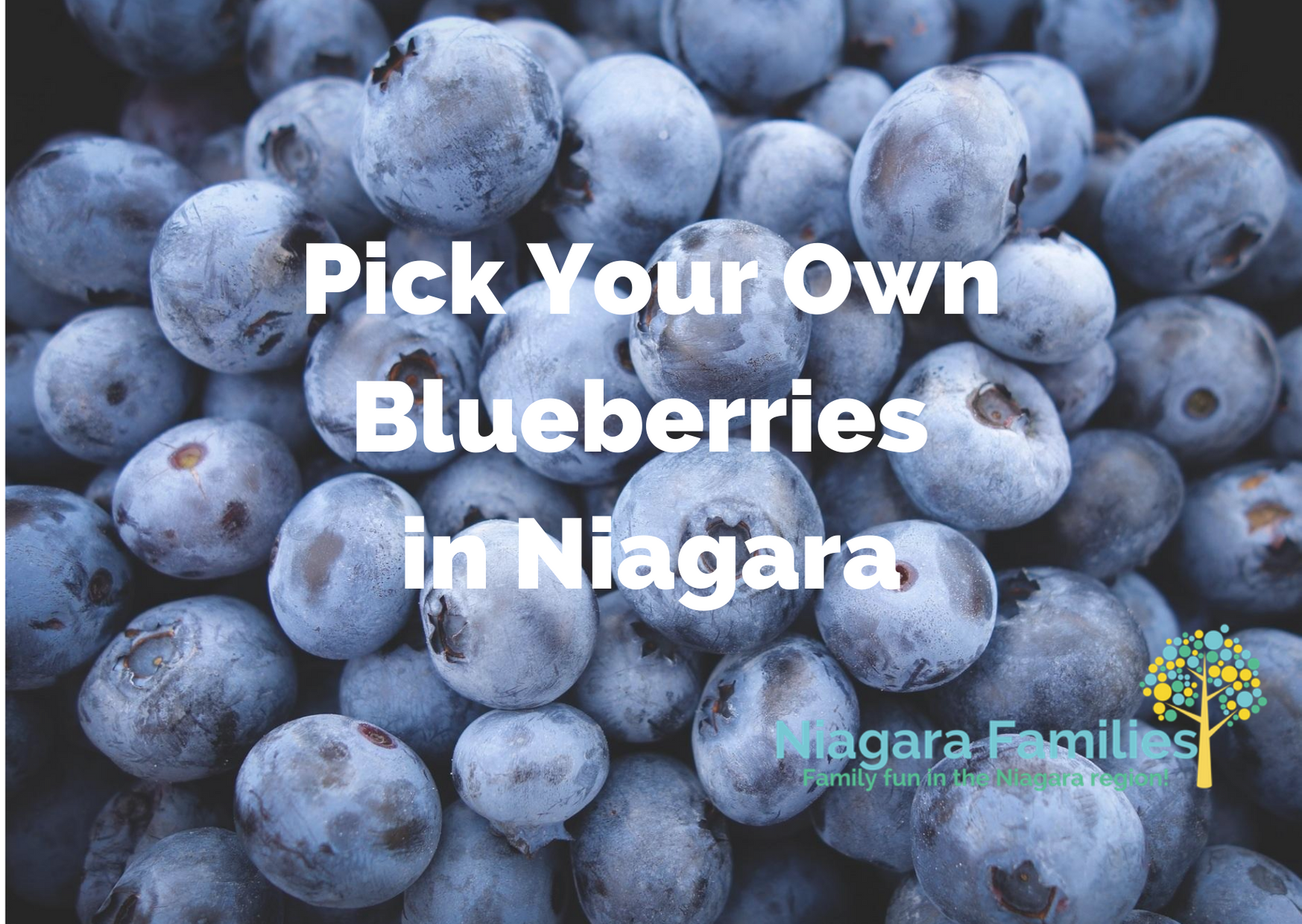 pick your own blueberries in niagara