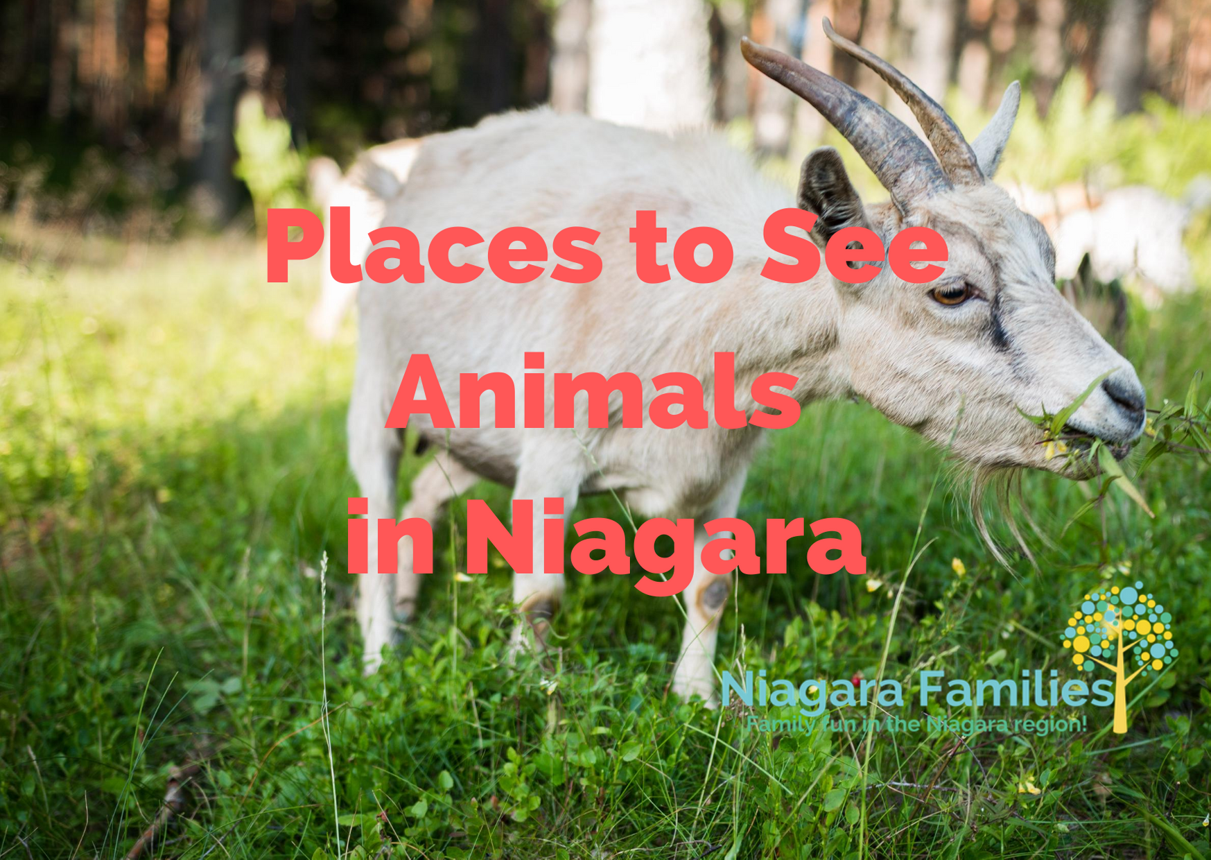 places to see animals in niagara